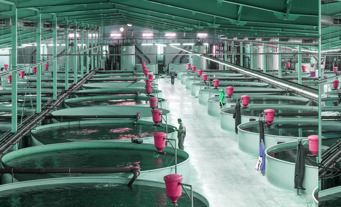 Производство выращивания рыбы 77